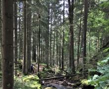 Träaska från biogasproduktion ger näring till skogen